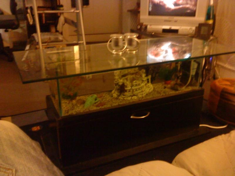 table basse aquarium Dsc00016