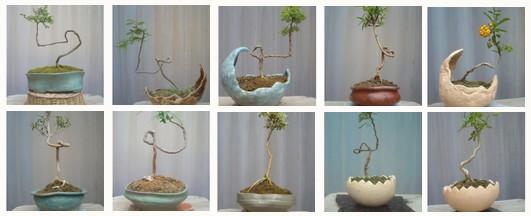 ¿Practica usted el bonsái y cuantos arbolitos tiene? Bunjin10