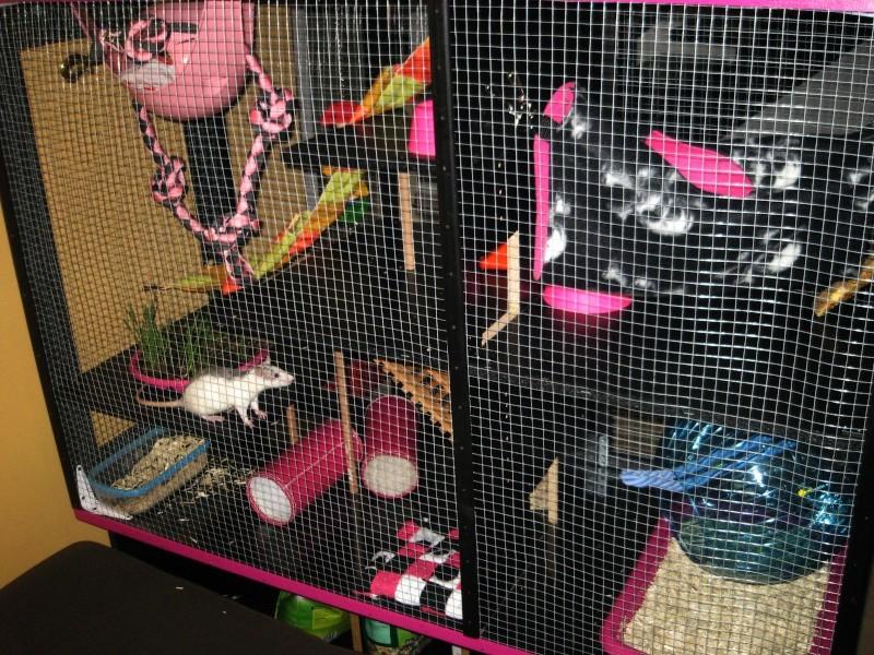 Transformation d'un meuble télé en cage! Img_2711