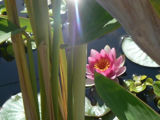 Votre  photo pour Octobre 2009 P1070514