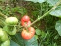 Débuter un potager / en jardinage - Page 5 Dsc00210