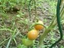 Débuter un potager / en jardinage - Page 5 Dsc00211