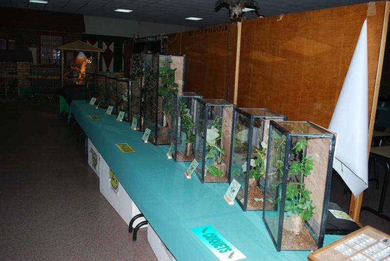 2009 - 09- les 26 et 27 - Exposition à Bailleul (59) Expo_310