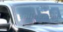 Familia Jolie-Pitt nos transitos de Los Angeles 07.11.09 910