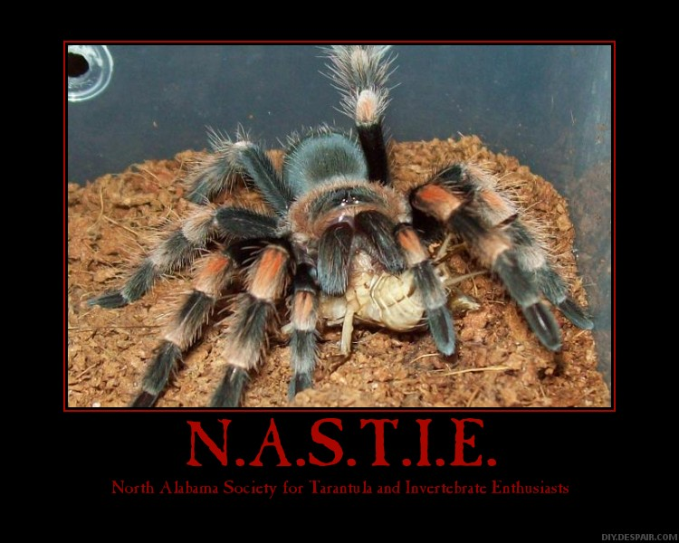 N.A.S.T.I.E. posters Nastie12