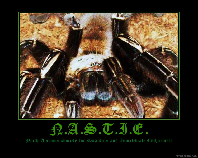 N.A.S.T.I.E. posters Nastie13