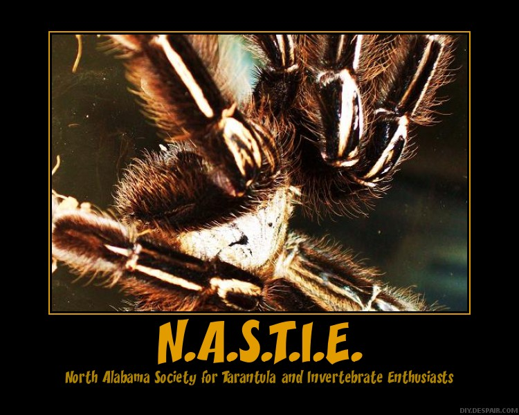 N.A.S.T.I.E. posters Nastie14