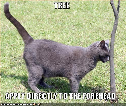 Post LOLcats here - Page 2 Funny-11