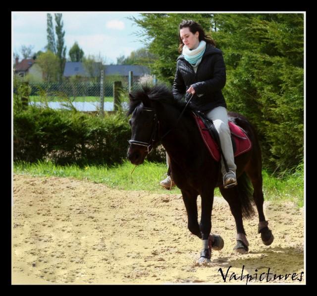 Mes photos de chevaux... - Page 4 Blog6210
