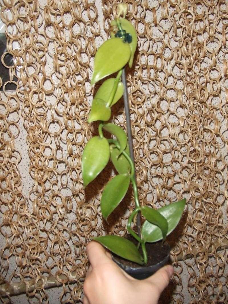 Tillandsias et orchidées de chez Annaturra( hééé oui encore) Tillan26