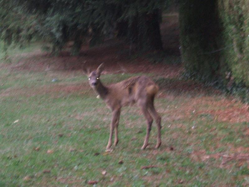 La photo du jour - Page 3 Bambi11