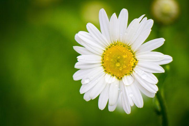 BON ANNIVERSAIRE ZARA Daisy-10