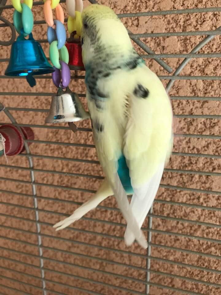 Ma Lilou se pique les plumes  Lilou10