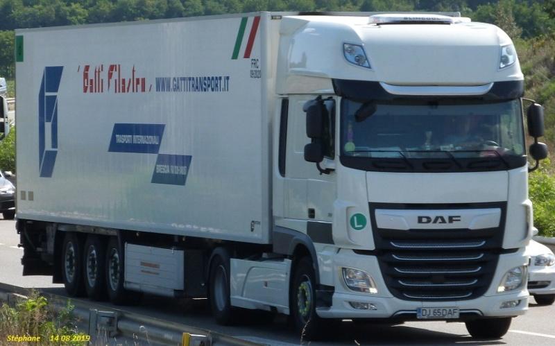 Gatti Filastro  (Brescia) P1470120