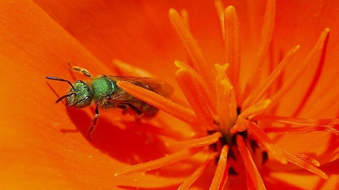 Taiwan doctor finds four sweat bees living inside woman's eye _1063711