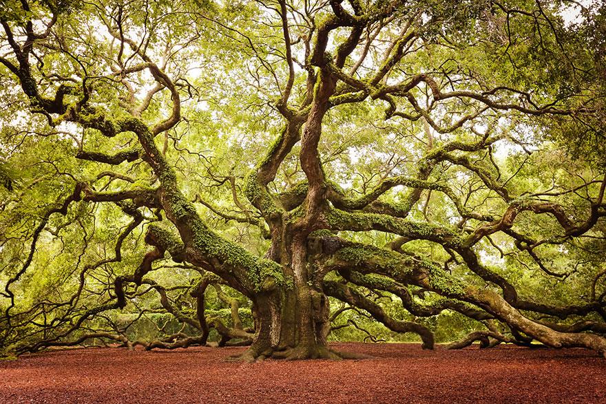 Beautiful trees of the world. Amazin10
