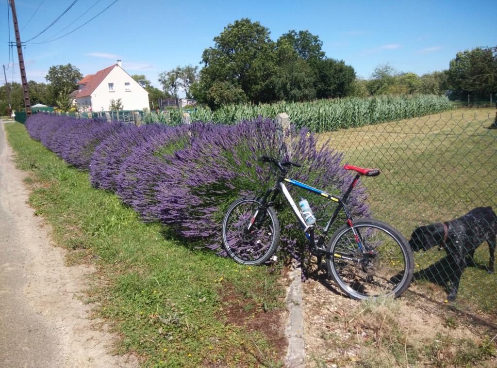 Engin electric de l'IUT de l' Aisne: 2019...reflexion mobilité - Page 26 Img_2178