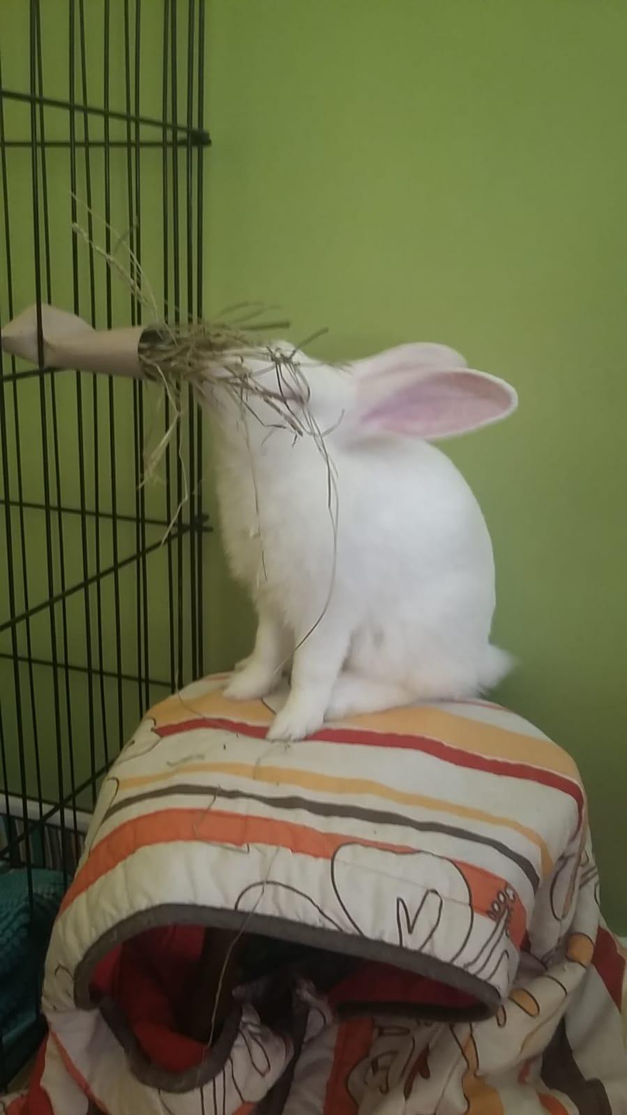 [White Rabbit]Lapins réhabilités de laboratoire à parrainer  - Page 2 05059310