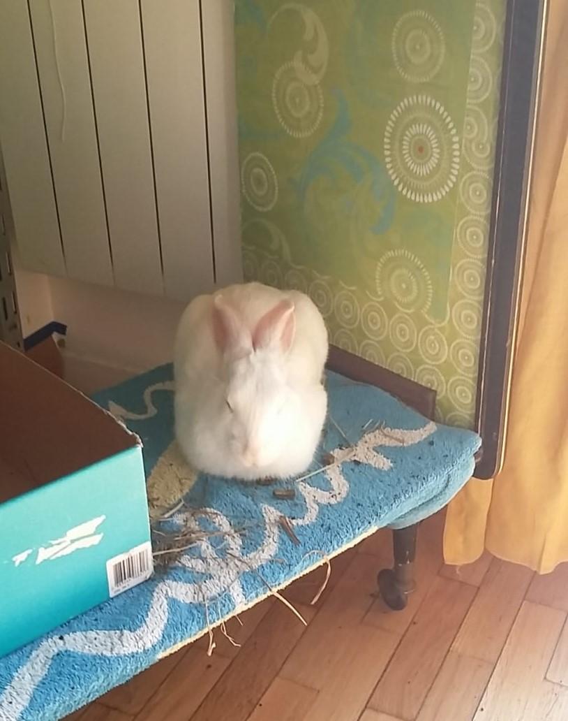 [White Rabbit]Lapins réhabilités de laboratoire à parrainer  - Page 2 4e288c10