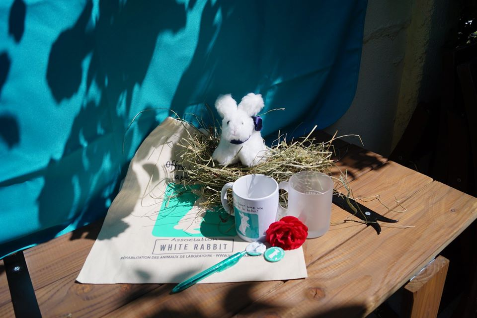 Association White Rabbit- Réhabilitation des lapins de laboratoire - Page 4 Annive10