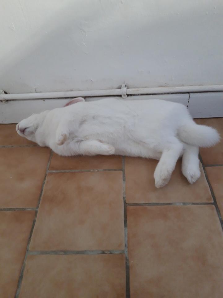 [White Rabbit]Lapins réhabilités de laboratoire à parrainer  - Page 2 Img_8314