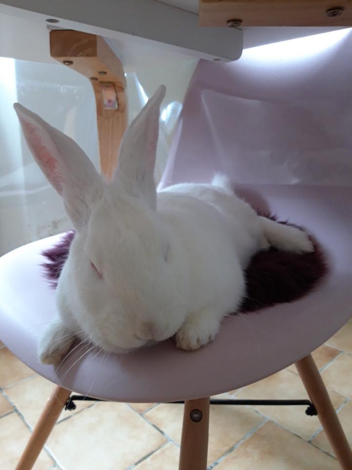 [White Rabbit]Lapins réhabilités de laboratoire à parrainer  - Page 2 Img_9110