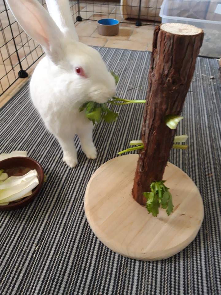 [White Rabbit]Lapins réhabilités de laboratoire à parrainer  - Page 2 Img_9913
