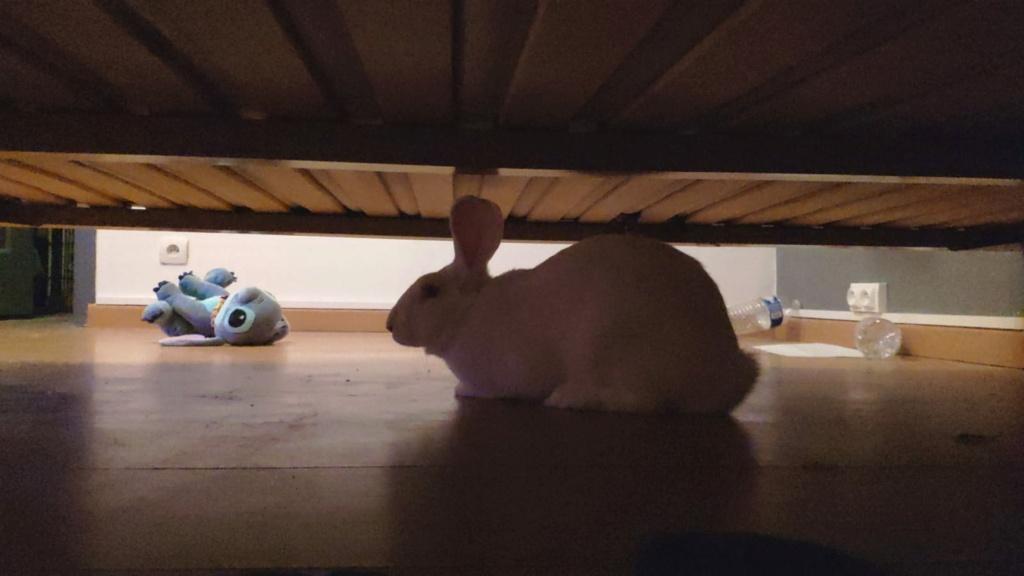 [White Rabbit]Lapins réhabilités de laboratoire à parrainer  - Page 2 Photo_96