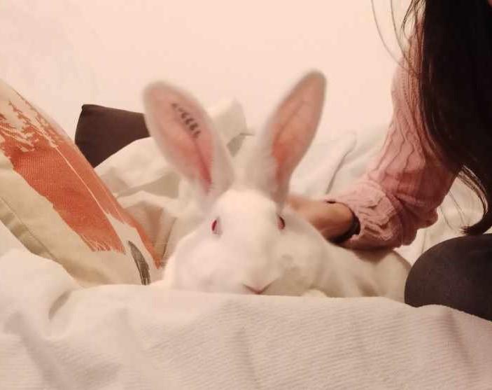 [White Rabbit]Lapins réhabilités de laboratoire à parrainer  - Page 2 Resize16
