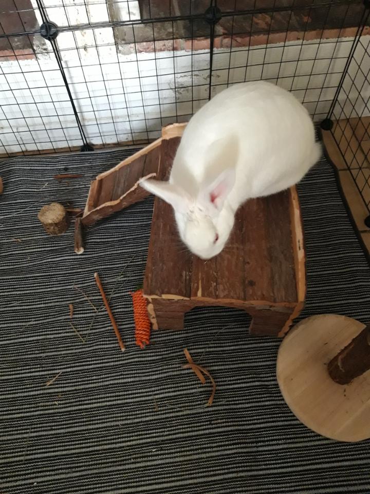 [White Rabbit]Lapins réhabilités de laboratoire à parrainer  - Page 2 Resize19