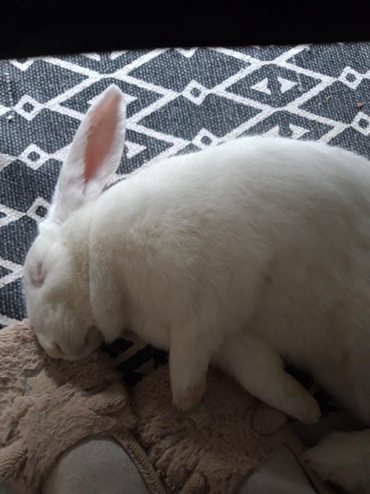 [White Rabbit]Lapins réhabilités de laboratoire à parrainer  - Page 2 Resize20