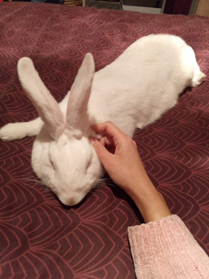 [White Rabbit]Lapins réhabilités de laboratoire à parrainer  - Page 2 Resize24