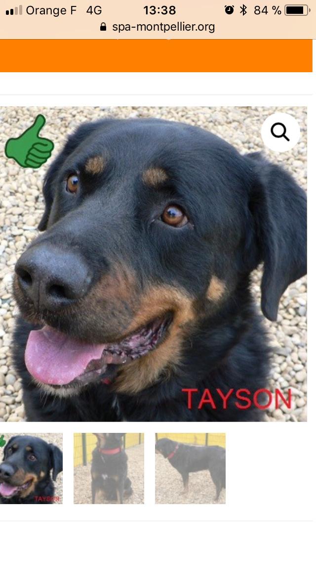 Tayson né en 2011: une gueule d'amour 7274fb10