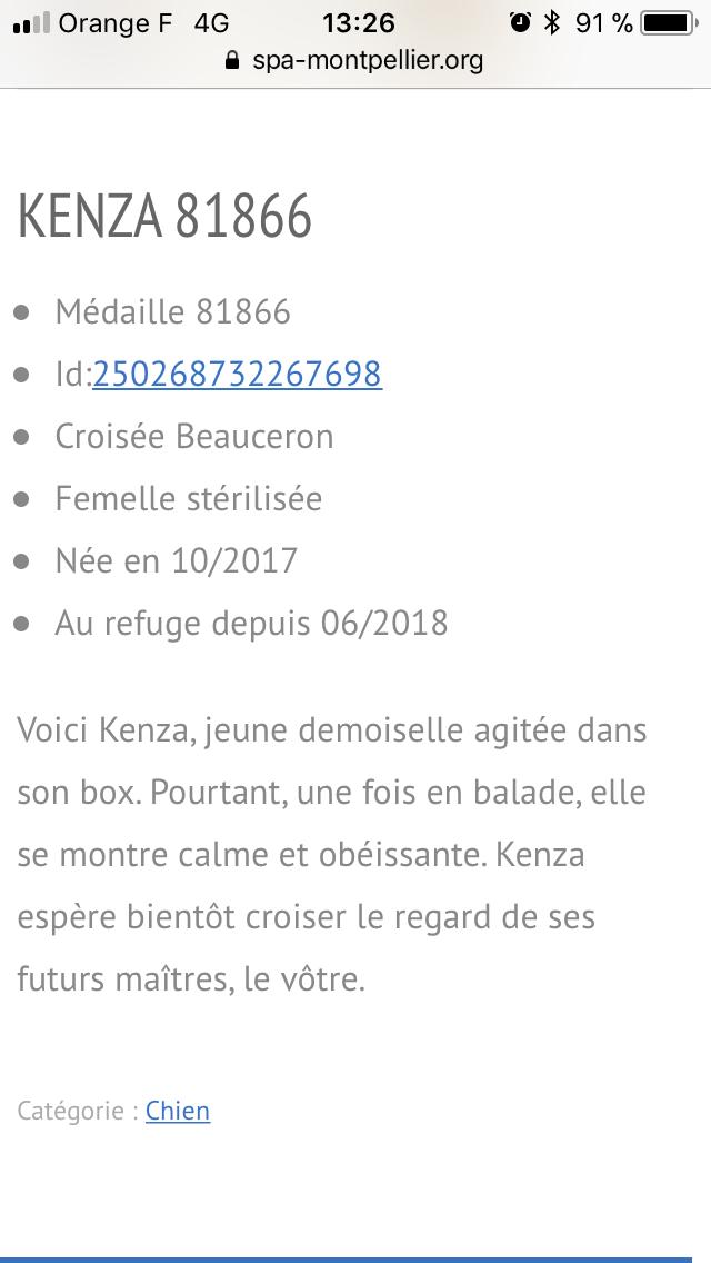 Kenza très jolie croisée beauceronne née en nov 2017 C63bb210