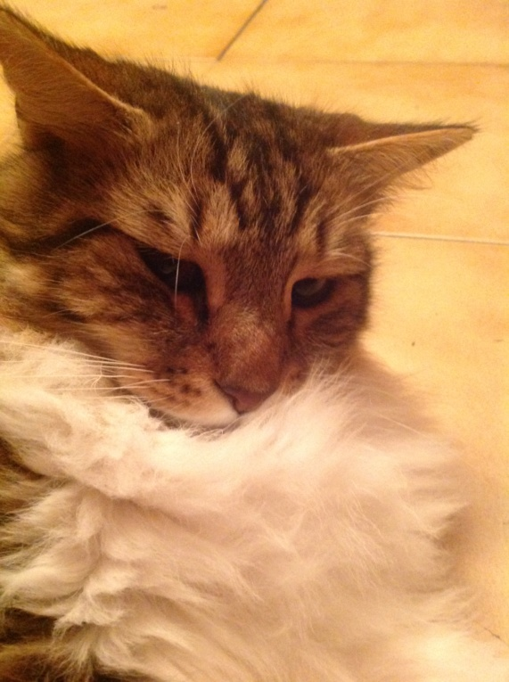 j ' adore mon chat !!! - Page 15 Le_cha10