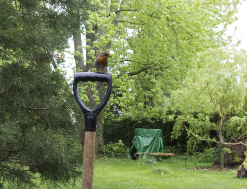 ils vivent dans nos jardins Img_9915