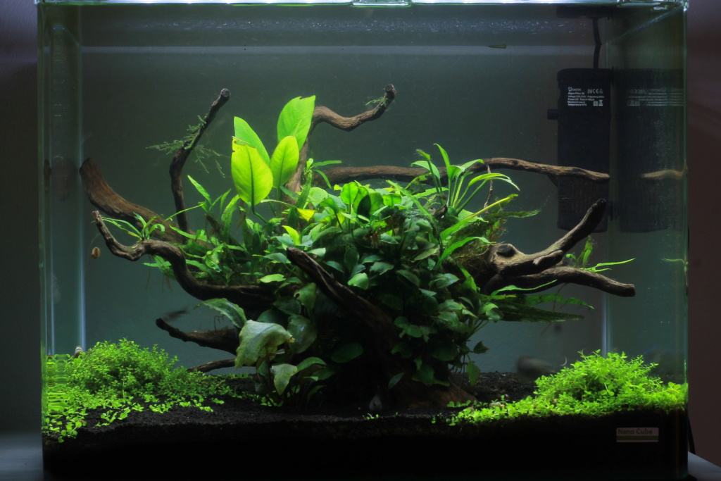 Scaper's Tank 55L by Freepony Img_3011