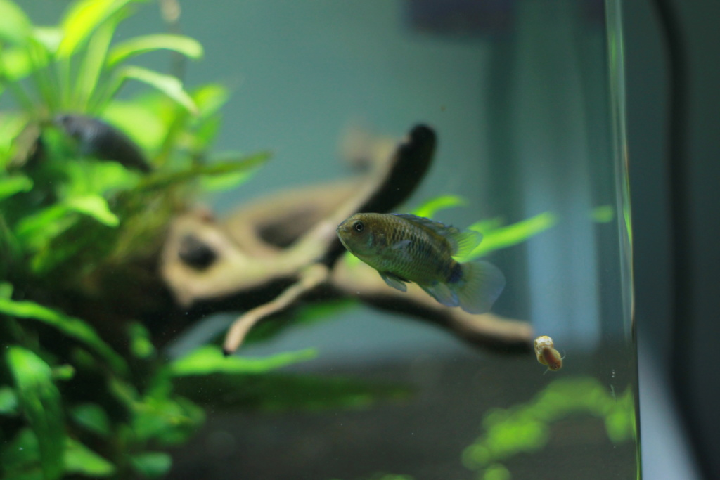 Scaper's Tank 55L by Freepony Img_3012