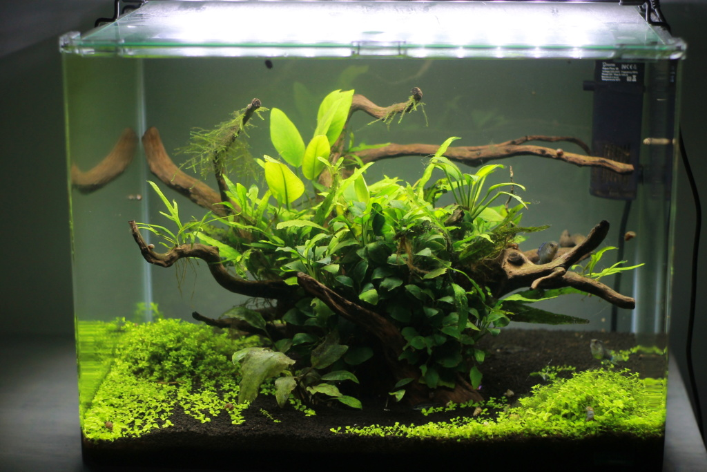 Scaper's Tank 55L by Freepony Img_3013