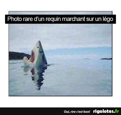 HUMOUR - Page 30 20170828
