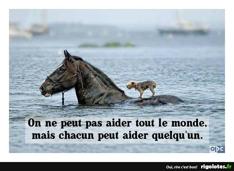 HUMOUR - Page 29 20171214