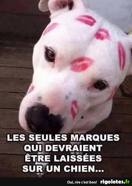 HUMOUR - Page 5 20180751