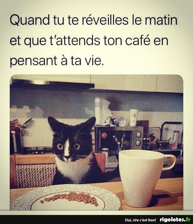 HUMOUR - Page 37 20180828
