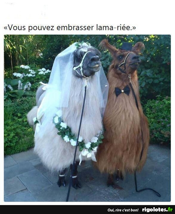 HUMOUR - Page 4 20180865