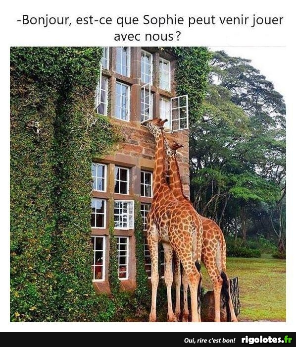 HUMOUR - Page 7 20180947