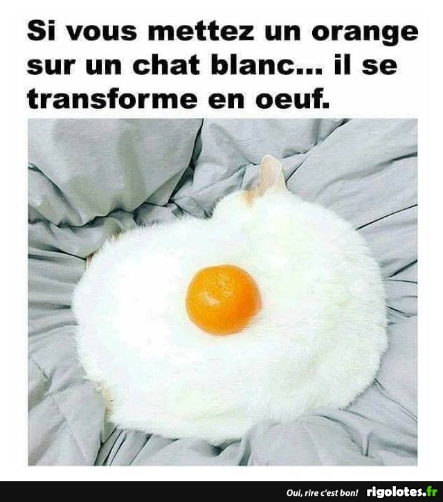 HUMOUR - Page 7 20180952