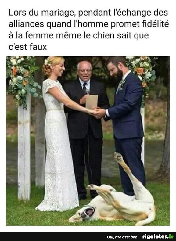 HUMOUR - Page 14 20181032