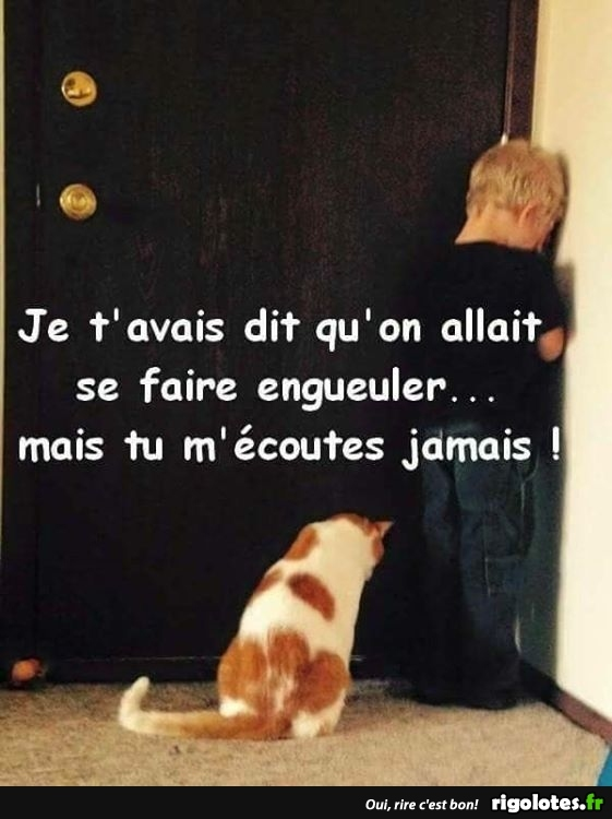 HUMOUR - Page 15 20181036