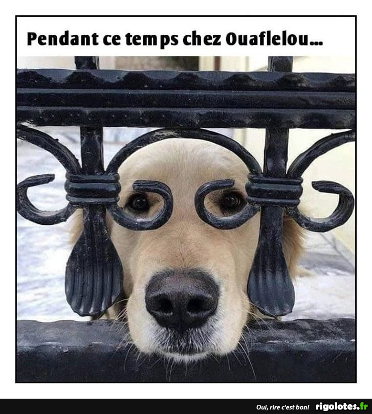 HUMOUR - Page 30 20181220