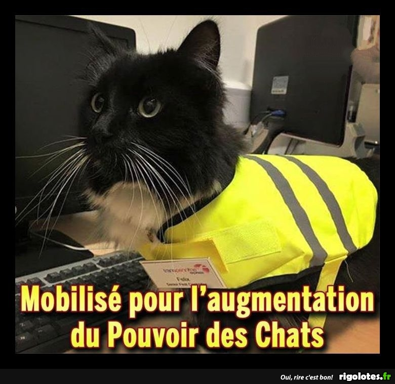 humour - Page 6 20181249